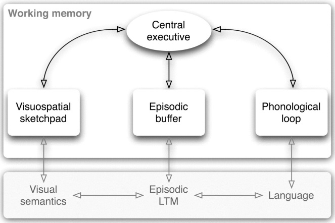 baddeley working memory model.jpg